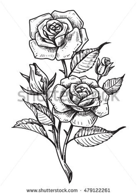 vector tattoo roses leaves on white stock vector 479122261