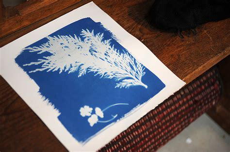 How To Make Cyanotype Paper - workshop for teachers cyanotypes cow house