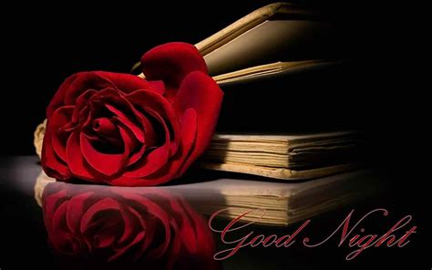 red rose love wallpapers wallpaper cave best romantic good night hd images and pictures download