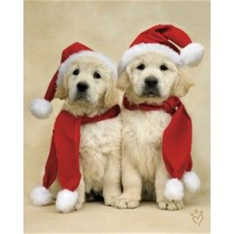golden retriever fleece fabric 17 best images about prints i fancy on warm animal pictures and
