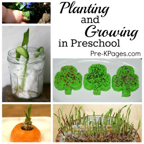 How To Grow Indoor Garden - science for kids planting and growing in preschool pre k pages
