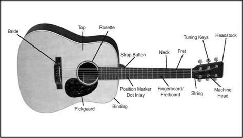 guitar diagram with parts the story your guitar cort guitar workers