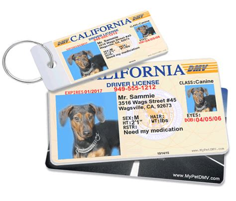 pet id card template mypetdmv official pet driver s license tag for all 50 states