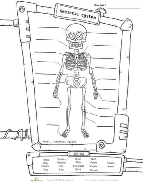 labeled diagram 3rd grade skeleton diagram diagram worksheets and skeletons