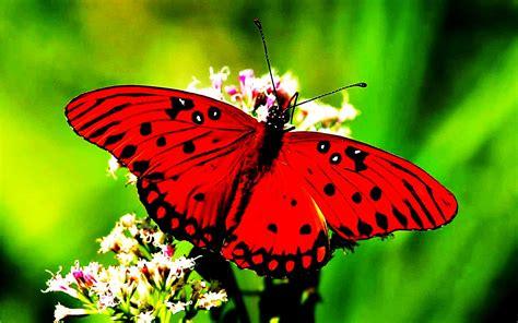 imagenes de mariposas de verdad descubriendo la vida mariposas animales de buena suerte