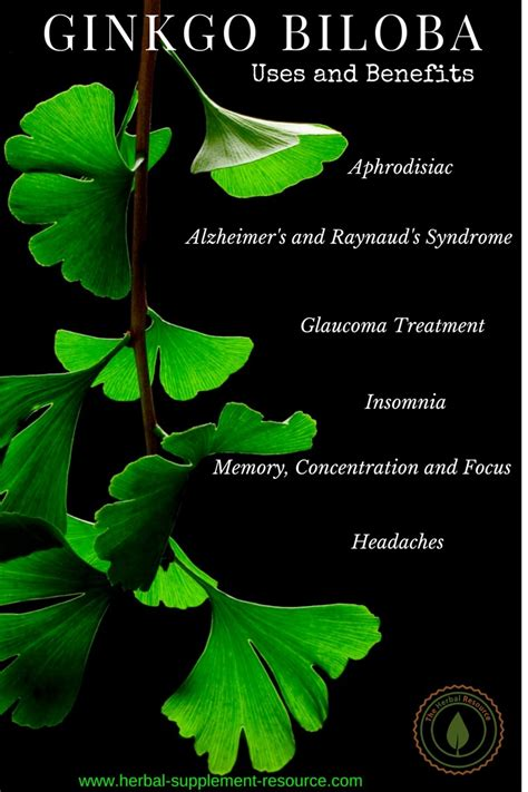 Hair Dryer Benefits And Side Effects benefits of ginkgo biloba in hair growth properties side