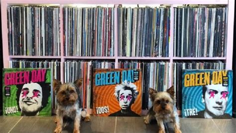 yorkies on instagram the vinyl yorkies on instagram are an audiophile s dogs dogtime