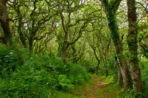 woodland trees photography by martin eager landscape nature woodland