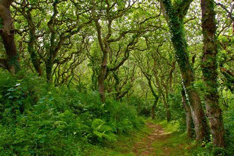 woodland tree photography by martin eager landscape nature woodland