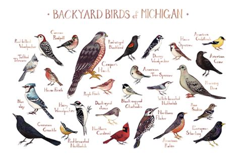 backyard birdsong guide minnesota