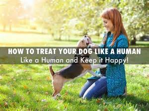 is cantaloupe bad for dogs how to treat your by vetsupplysource