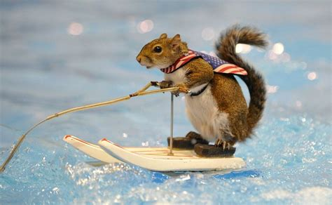 image gallery squirrel water