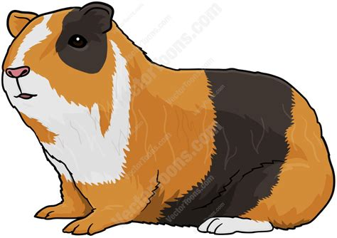 Home Design Do S And Don Ts Mixed Brown Guinea Pig Vector Graphics Vectortoons Com