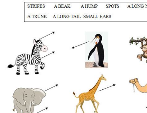 printable animal body parts animal body parts worksheet