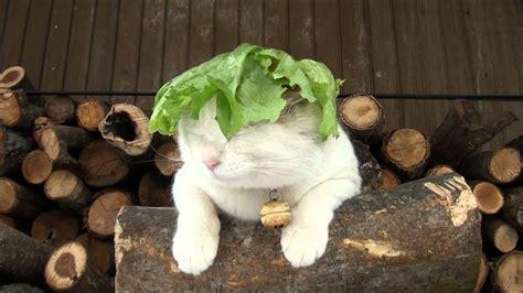 lettuce youtube