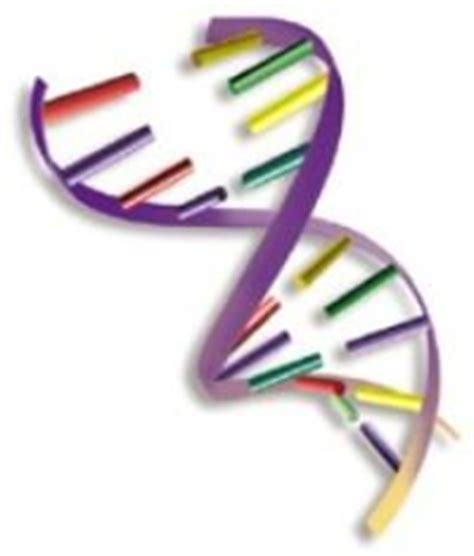 dna colors basic and color genetics