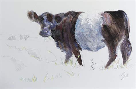 Cow Duvet Cover Belted Galloway Cow Illustration Drawing By Mike Jory