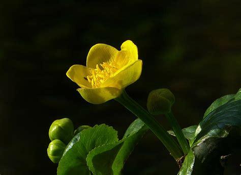 fiori di bach ansia fiori di bach per ansia funzionano davvero