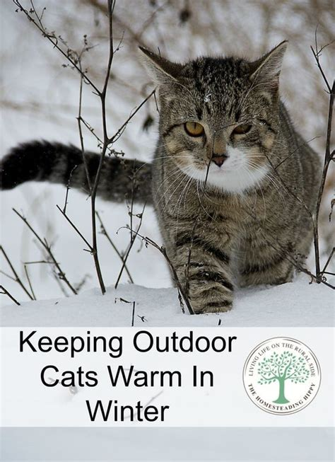 how to keep a warm outside best 25 outdoor cats ideas on