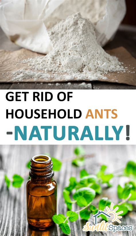 how to get rid of d in bedroom how to get rid of ants cleaning home autos post
