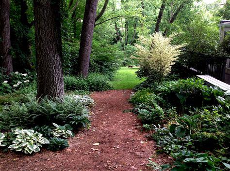 shade gardening carolyn s shade gardens