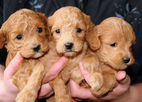 cuccioli alimentazione come accudire i cuccioli di alimentazione e consigli