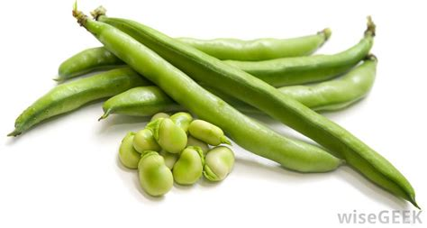 green bean what are haricot vert beans with pictures