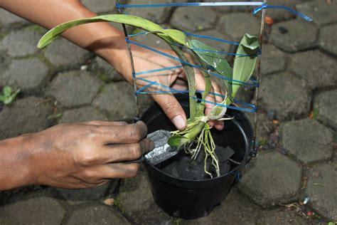 Jual Pot Anggrek Kayu budidaya anggrek lc nursery