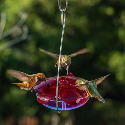 shop for hummingbird tray feeders selection of tray style