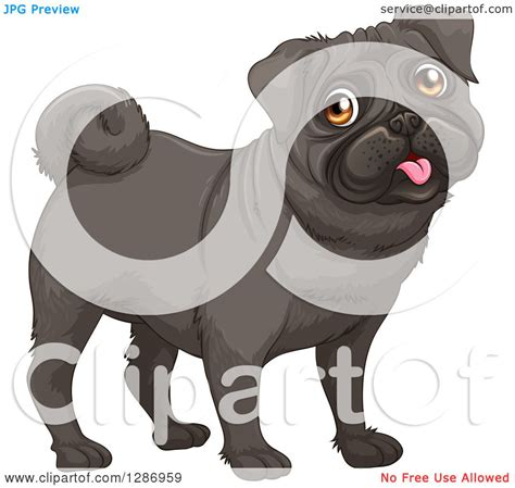 black pug clipart clipart of a happy black pug royalty free vector illustration by colematt 1286959