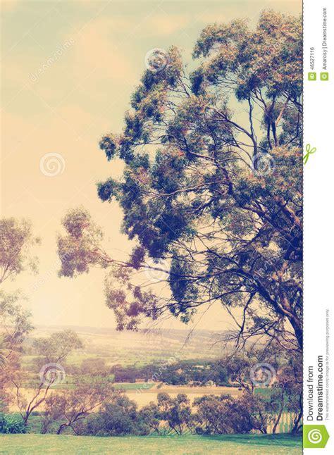 imagenes de paisajes vintage paisaje retro del australiano del estilo del vintage foto