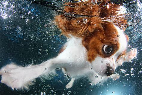designboom little catch seth casteel snaps underwater puppies making a splash