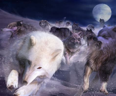 wolf   night  wiki  ice  fire