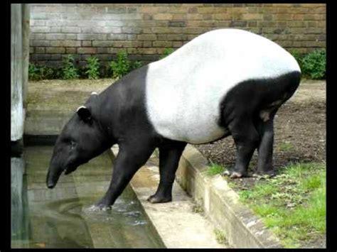 animales en peligro de extincion youtube