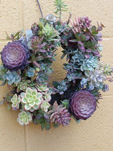 facts about succulents 7 facts you need to know about the new stylish gardening