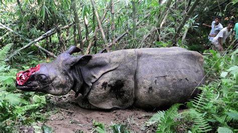 Save Javan Rhino - YouTube