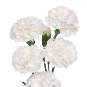 Wedding Centerpiece Vases In Bulk White Mini Carnation Flowers