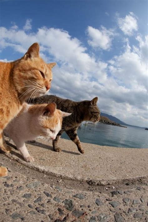 cat island in japan cat heaven island in japan 50 pics