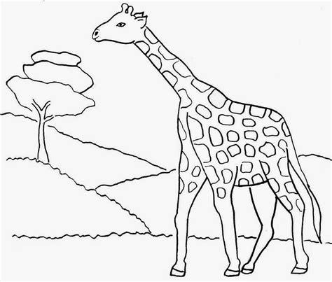 gambar yang belum di warnai lembar untuk belajar mewarnai untuk anak tema hewan hewan