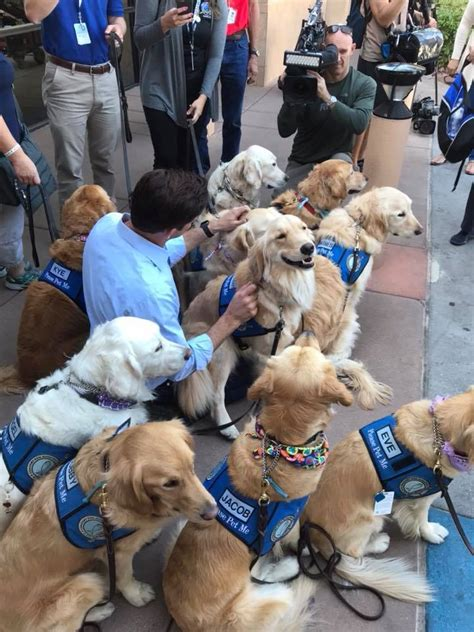 k 9 comfort dogs perros de terapia reconfortan a sobrevivientes de masacre