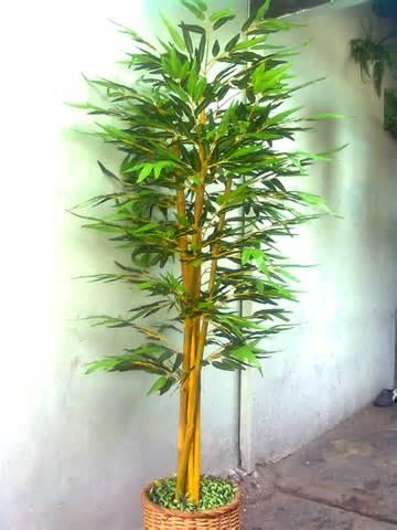 gambar pohon bambu related keywords suggestions gambar pohon bambu keywords