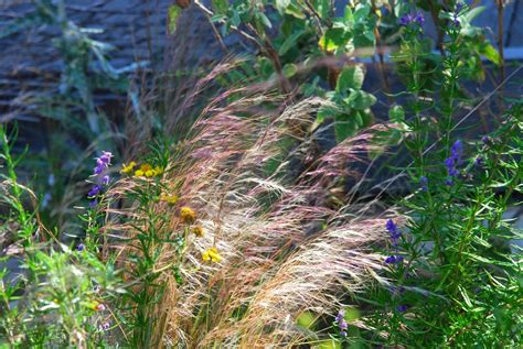 top 28 plants of san diego a california native plant garden in san diego county annuals a