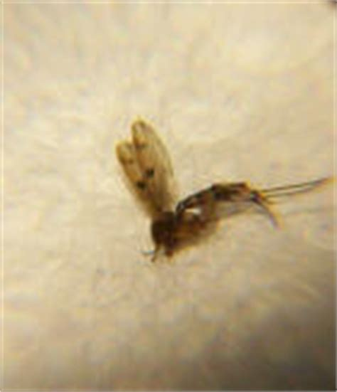 flying bugs in bathroom what can you use to kill bed bugs ground wasp pesticide