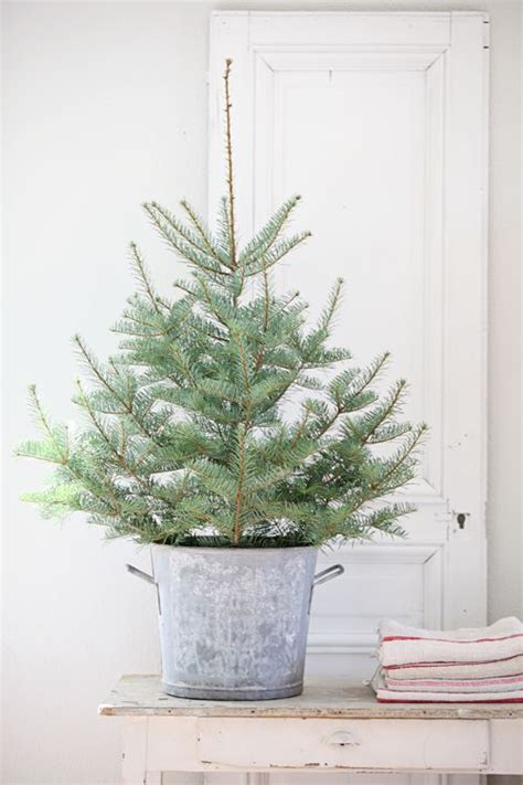 tabletop christmas tree in galvanized bucket a great