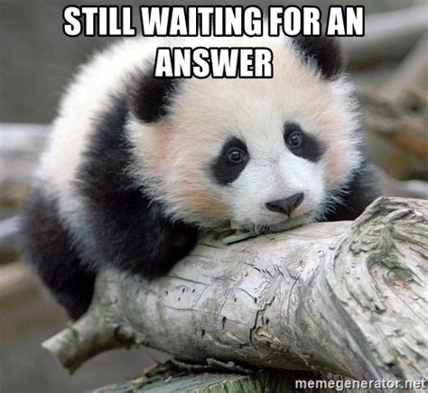 Sad Panda Meme Generator - still waiting for an answer sad panda meme generator