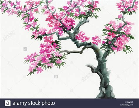 tree in blossom with pink flowers watercolor painting