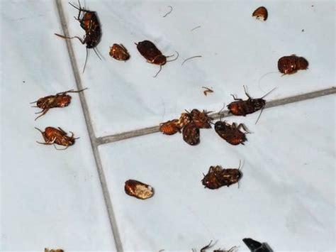 come eliminare scarafaggi in cucina come eliminare gli scarafaggi dalla casa con metodi naturali