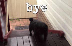 waving pug byeee gif bye pug adorable gifs say more with tenor