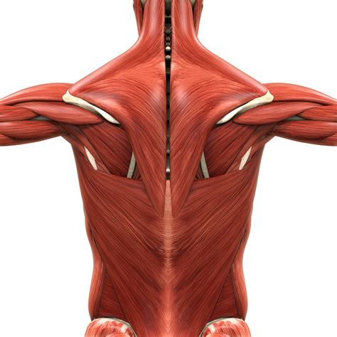 what are the causes of low back muscle spasming