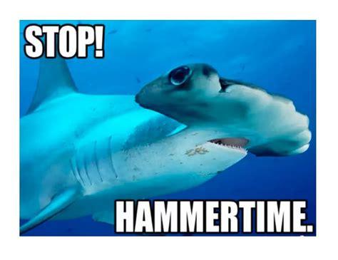 shark meme best shark memes popsugar tech